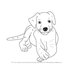 How to Draw a Labrador Puppy