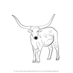 How to Draw a Longhorn Cattle