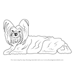 How to Draw a Yorkshire Terrier