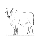 How to Draw a Zebu