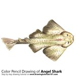How to Draw an Angel Shark