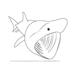 How to Draw a Basking Shark
