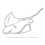 How to Draw a Bat Ray