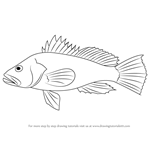 How to Draw a Black Sea Bass