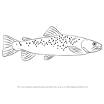 How to Draw a Brown Trout