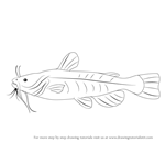 How to Draw a Bullhead Fish