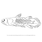 How to Draw a Coelacanth