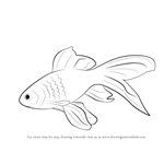 How to Draw a Gold Fish