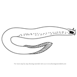 How to Draw Hagfish
