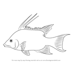 How to Draw a Hogfish