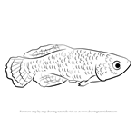 How to Draw a Killifish