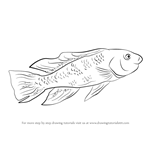 How to Draw a Lake Magadi Tilapia