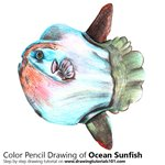 How to Draw a Ocean Sunfish
