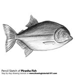 How to Draw a Piranha