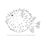 How to Draw a Pufferfish