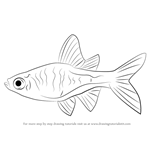 How to Draw a Rasbora