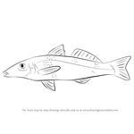 How to Draw a Whiting Fish