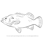 How to Draw a Wreckfish