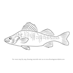 How to Draw a Yellow perch