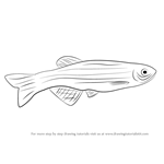 How to Draw a Zebrafish