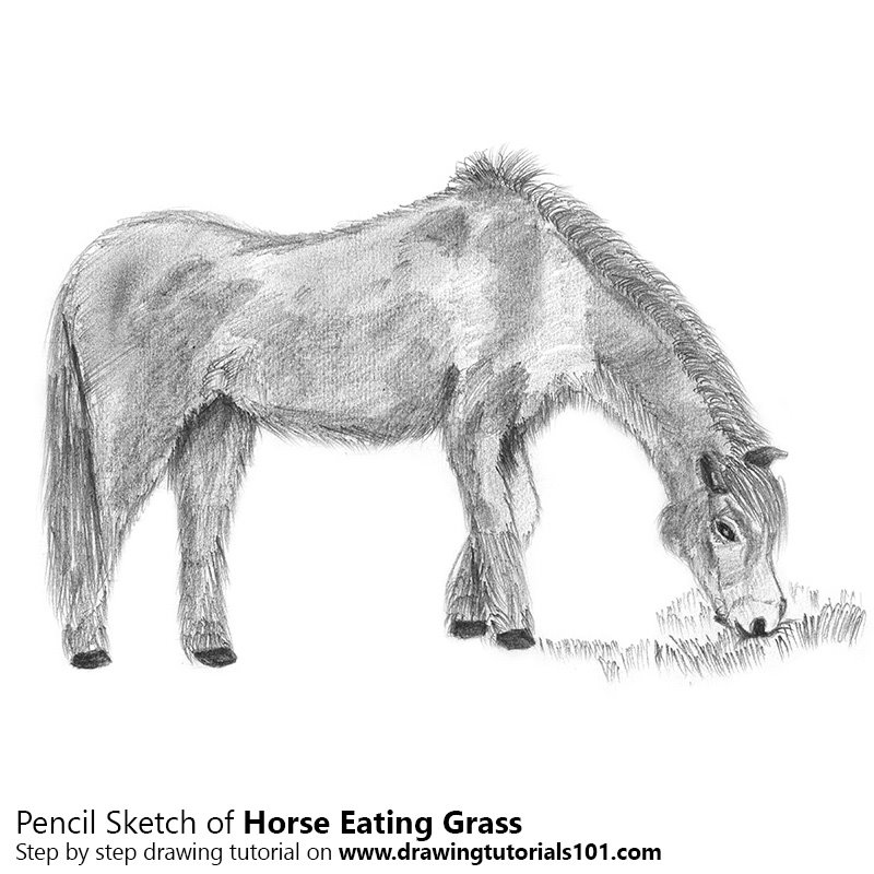 Pencil Sketch of Horse Eating Grass - Pencil Drawing