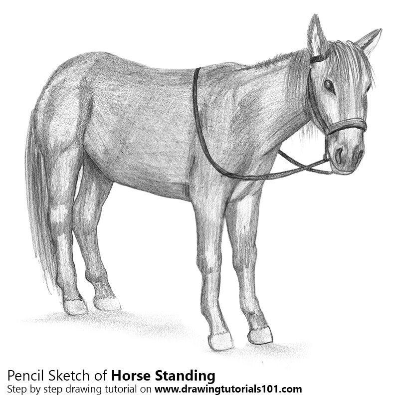 Pencil Sketch of Standing Horse - Pencil Drawing