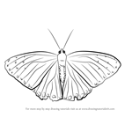 How to Draw a Beautiful Butterfly