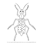 How to Draw a Blister Beetle