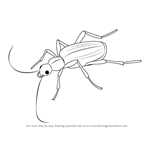 How to Draw a Bombardier Beetle