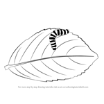 How to Draw a Caterpillar on a Leaf
