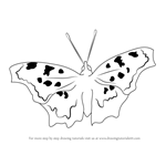How to Draw a Eastern Comma