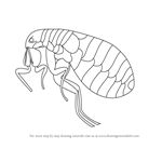 How to Draw a Flea