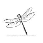How to Draw a Flying Dragonfly