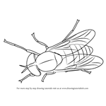 How to Draw a Horse-Fly