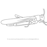 How to Draw a Locust