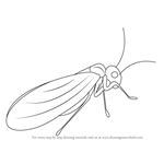 How to Draw a Psocoptera