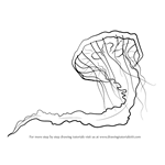 How to Draw a Pacific Sea Nettle