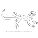 How to Draw a Green Lizard