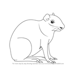 How to Draw an Agouti