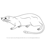 How to Draw an Arboreal Soft-furred Spiny-rat