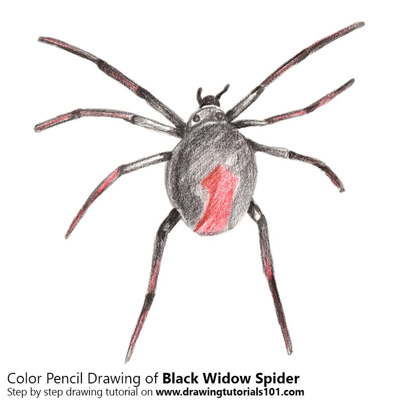 Widow Spider Color Pencil Drawing