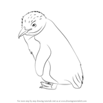 How to Draw a Fairy Penguin