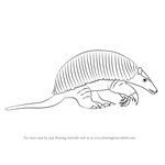 How to Draw a Giant armadillo