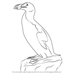 How to Draw a Great Auk