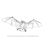 How to Draw a Little Brown Bat