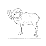How to Draw a Mouflon