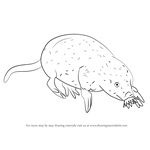 How to Draw a Star-Nosed Mole