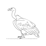 How to Draw a White-rumped vulture