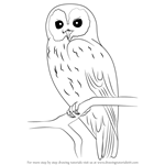 How to Draw a Tawny Owl