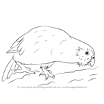 How to Draw a Kakapo